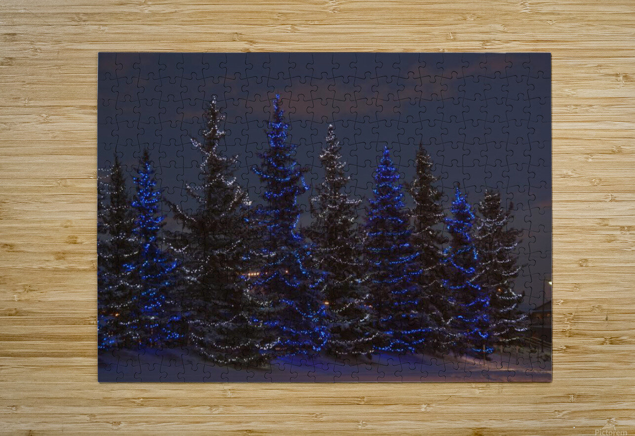 Calgary, Alberta, Canada; A Row Of Evergreen Trees With Christmas Lights  HD Metal print with Floating Frame on Back