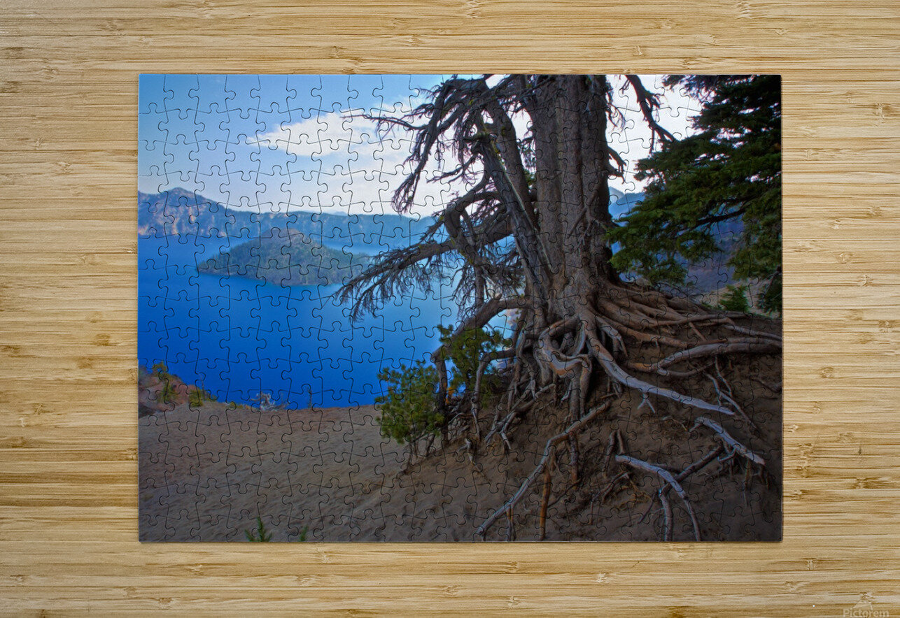 Gnarled White Pine overlooking Crater Lake Aug 2015  HD Metal print with Floating Frame on Back
