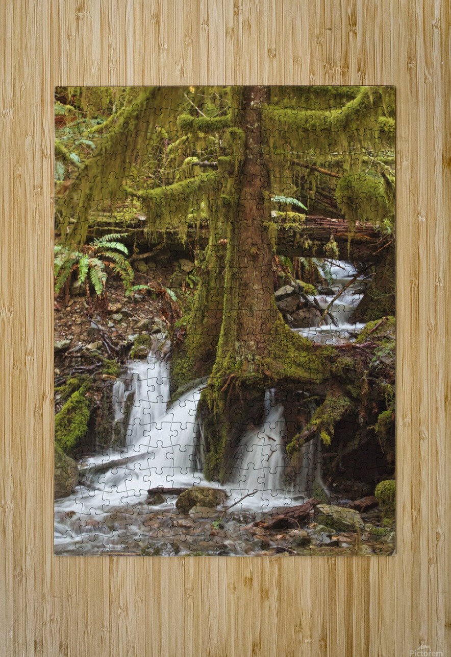 Water flowing through tree roots at Opal Creek Wilderness, Oregon  HD Metal print with Floating Frame on Back