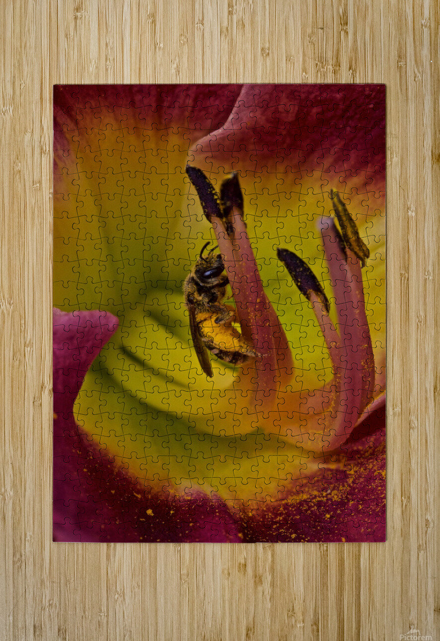 Bee Inside Corn Lily - Portrait  HD Metal print with Floating Frame on Back