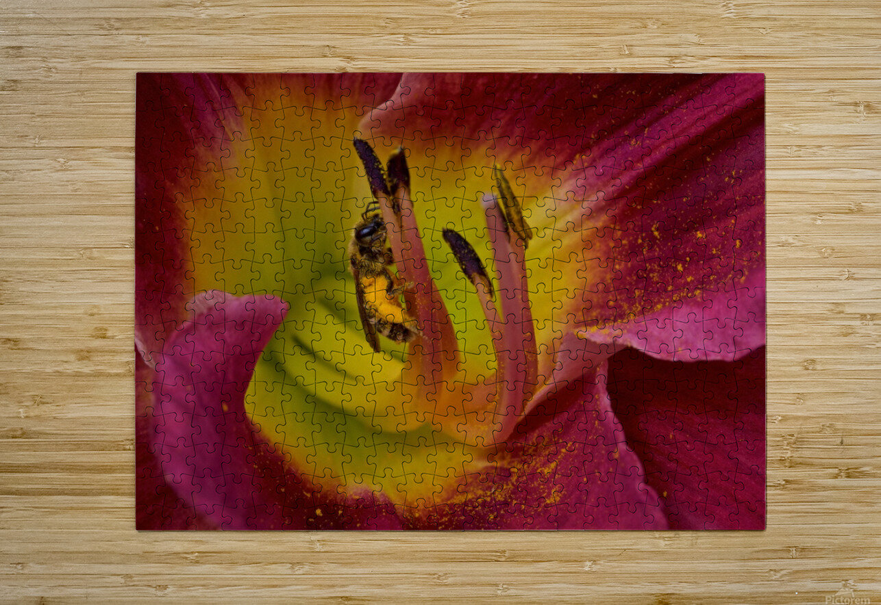 Bee Inside Corn Lily - Landscape  HD Metal print with Floating Frame on Back