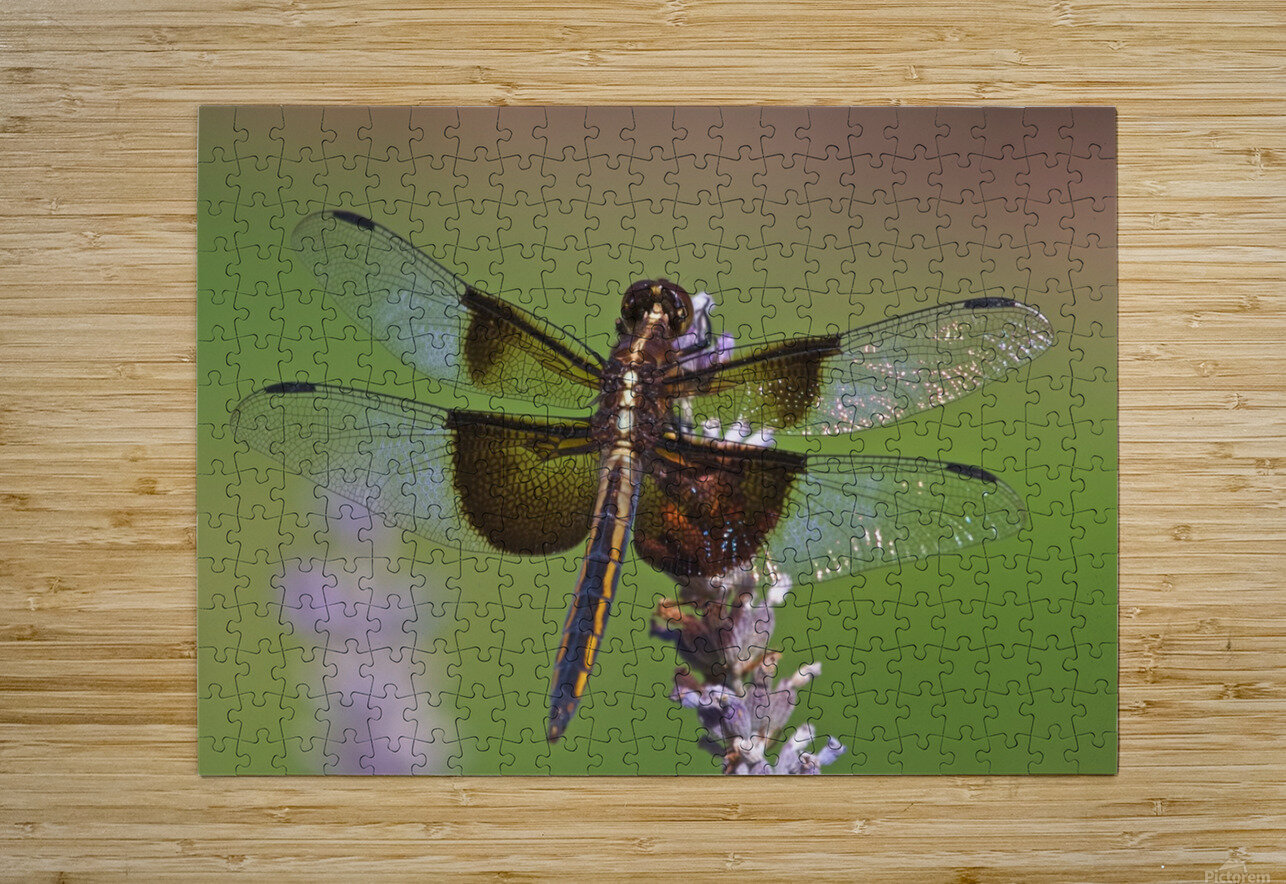 Dragonfly on Lavender  HD Metal print with Floating Frame on Back