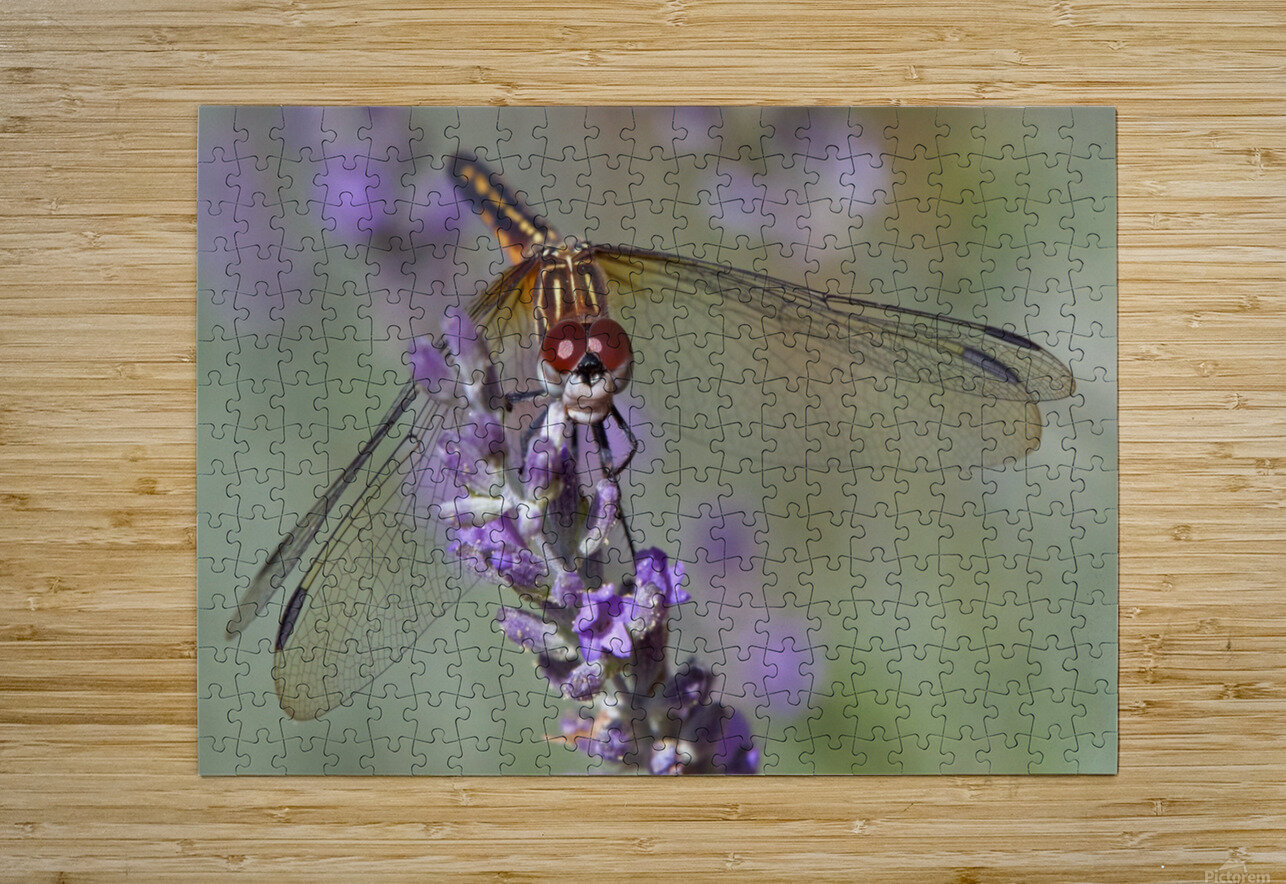 Dragonfly resting on flower.  HD Metal print with Floating Frame on Back