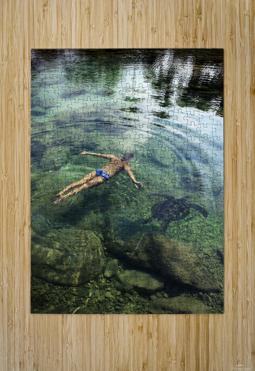 Hawaii, Oahu, Man And Hawaiian Sea Turtle Swimming Side By Side In The Ocean Reef, View From Above.  HD Metal print with Floating Frame on Back