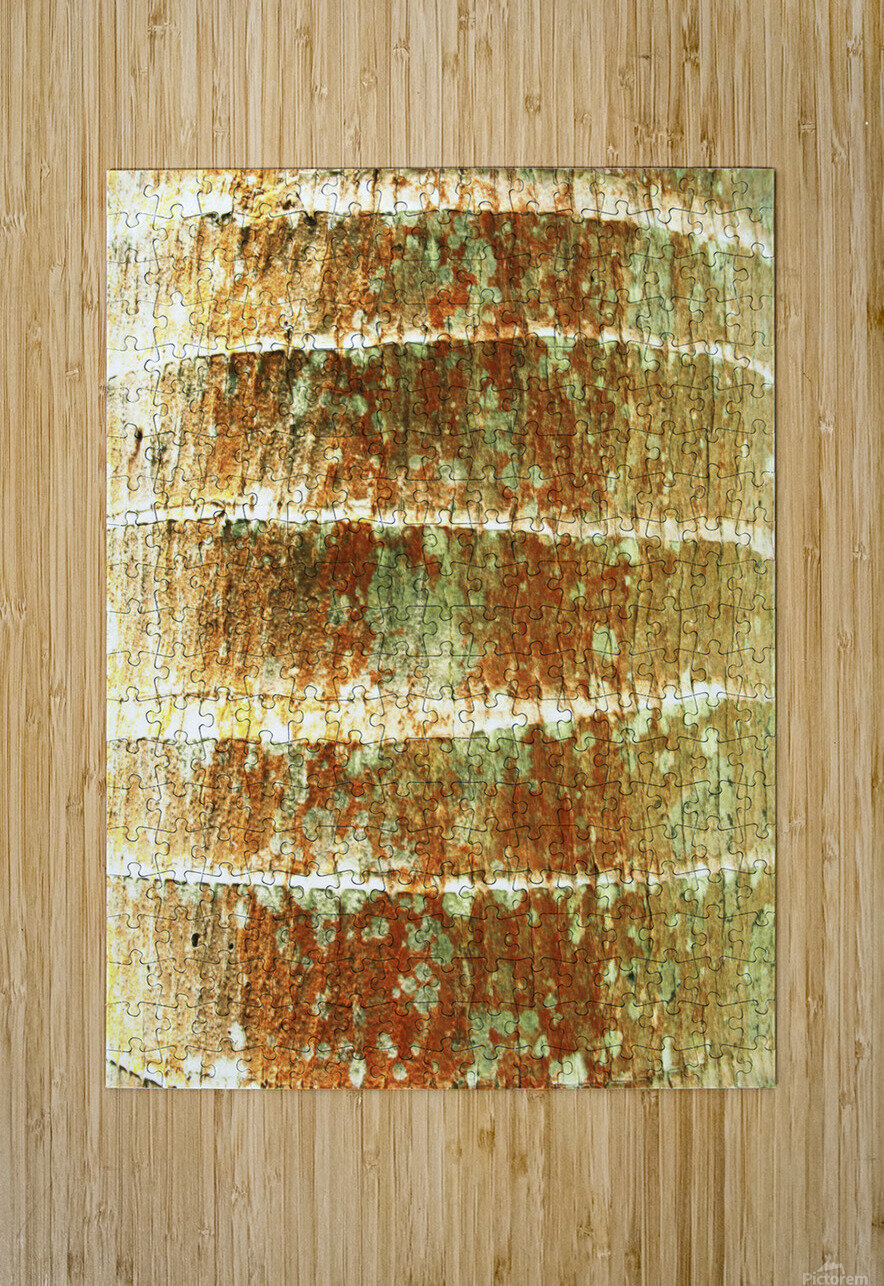 Hawaii, Oahu, Close-Up Of Coconut Palm Tree Bark Texture.  HD Metal print with Floating Frame on Back