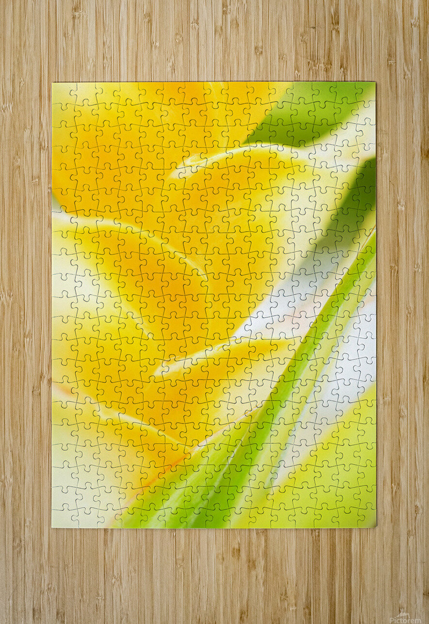 Hawaii, Oahu, Close-Up Of Heliconia Plant.  HD Metal print with Floating Frame on Back