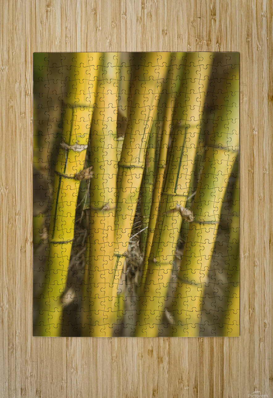 Close-Up Of Bamboo Stalks.  HD Metal print with Floating Frame on Back