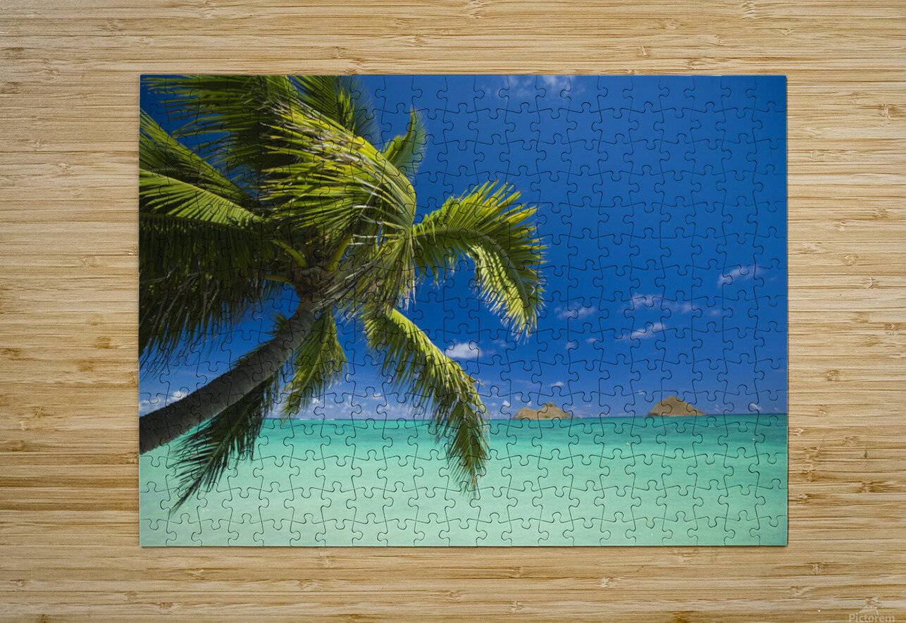 USA, Hawaii, Oahu, Mokulua island in background; Lanikai, Palm tree over Pacific Ocean  HD Metal print with Floating Frame on Back