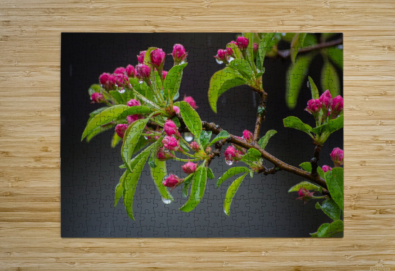 Spring has Sprung  HD Metal print with Floating Frame on Back