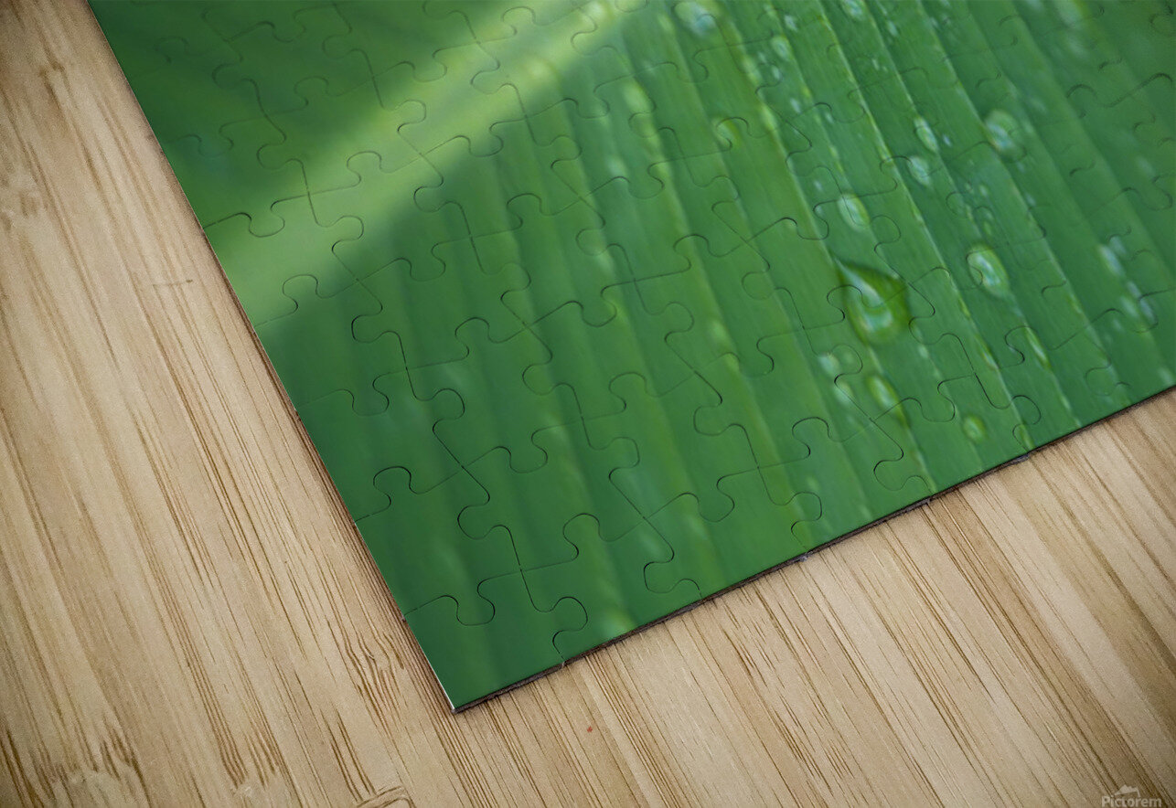 Close-Up Detail Green Banana Leaf With Droplets Of Water, Dew HD Sublimation Metal print