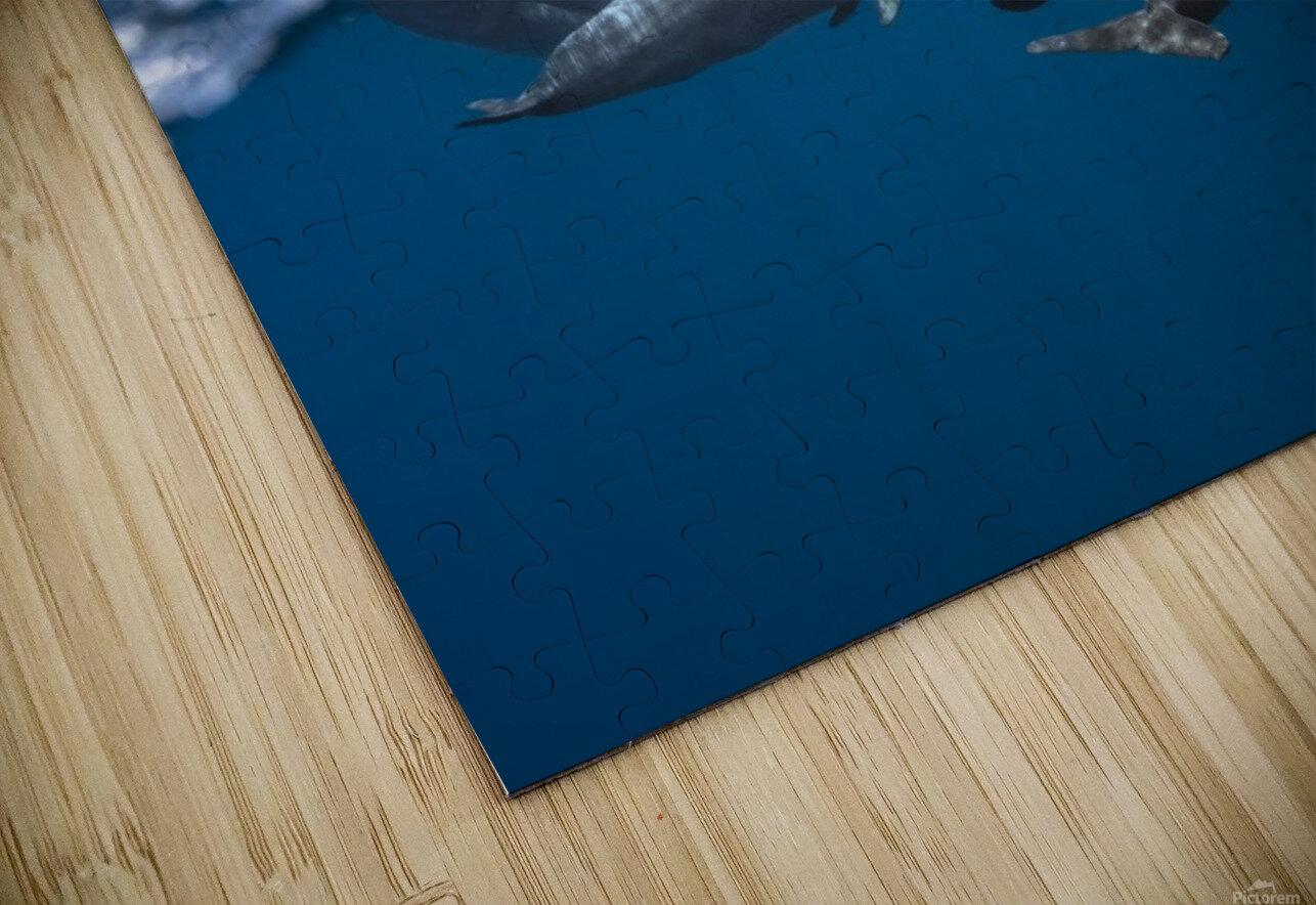 Dolphins HD Sublimation Metal print