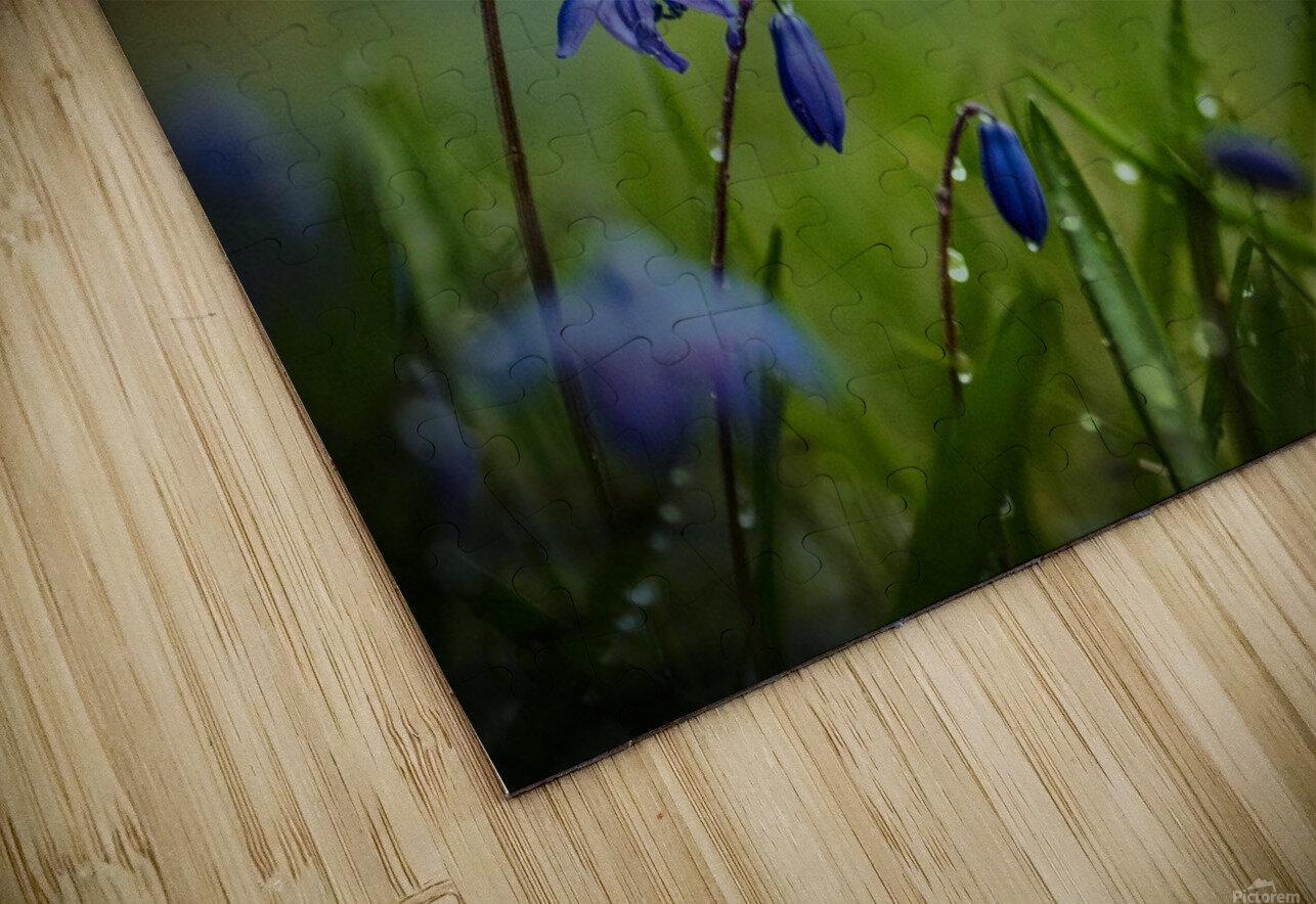 After the spring rain HD Sublimation Metal print