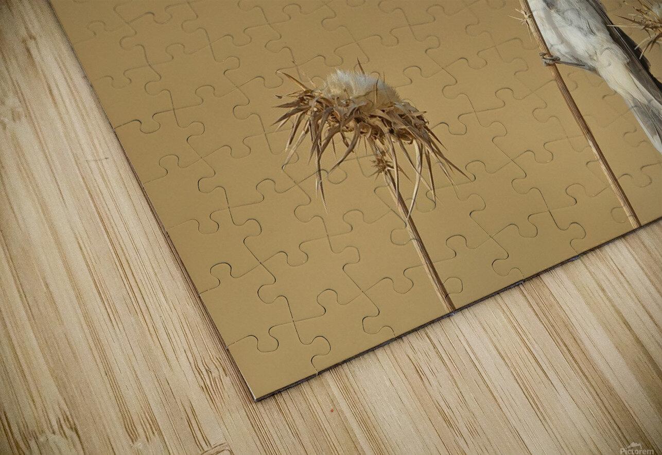 Woodchat Shrike HD Sublimation Metal print