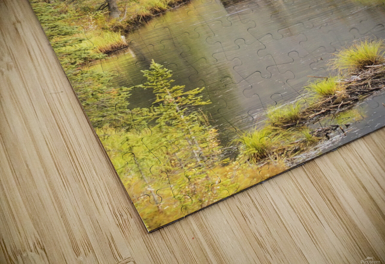 Bull and cow moose (alces alces) feeding in a shallow pond south of Cantwell, photo taken from Parks Highway common moose habitat; Alaska, United States of America HD Sublimation Metal print