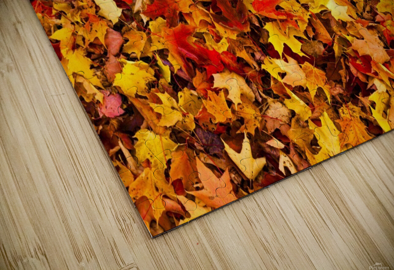 Autumn leaves on the ground; Iron Hill, Quebec, Canada HD Sublimation Metal print