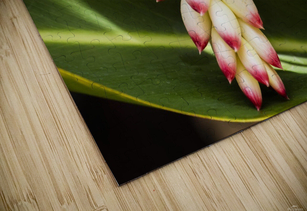 Close-up of white ginger flower Alpinia; Maui, Hawaii, United States of America HD Sublimation Metal print