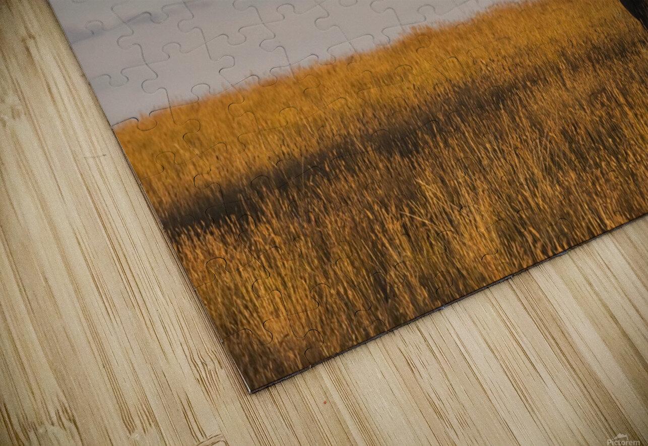 Bison (bison bison), Grasslands National Park; Saskatchewan, Canada HD Sublimation Metal print