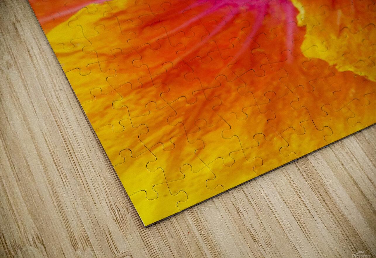 Close-up macro shot of a beautiful orange, pink and yellow Hibiscus flower; Honolulu, Oahu, Hawaii, United States of America HD Sublimation Metal print