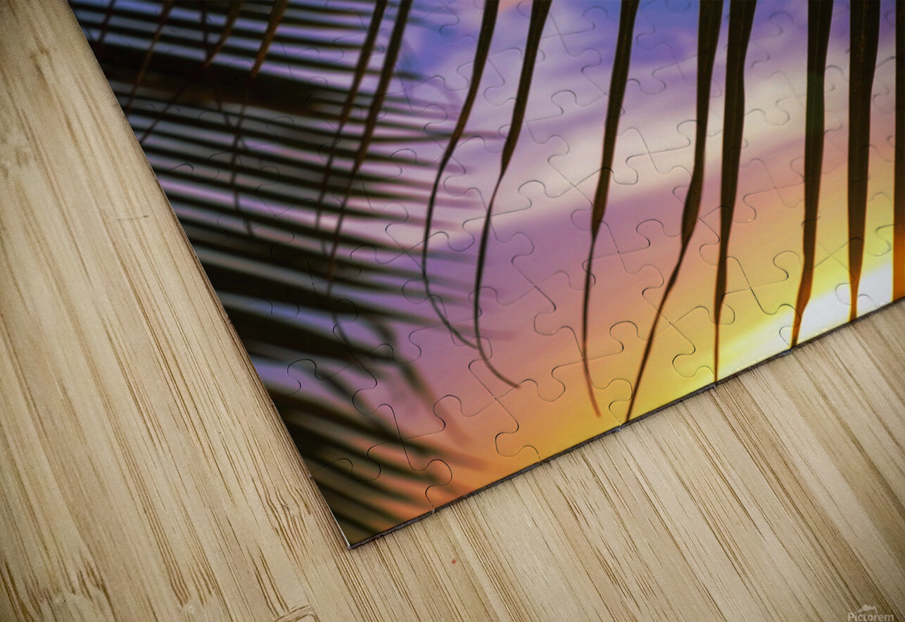 Close-up of silhouetted palm fronds with beautiful sunset color sky in the background; Honolulu, Oahu, Hawaii, United States of America HD Sublimation Metal print