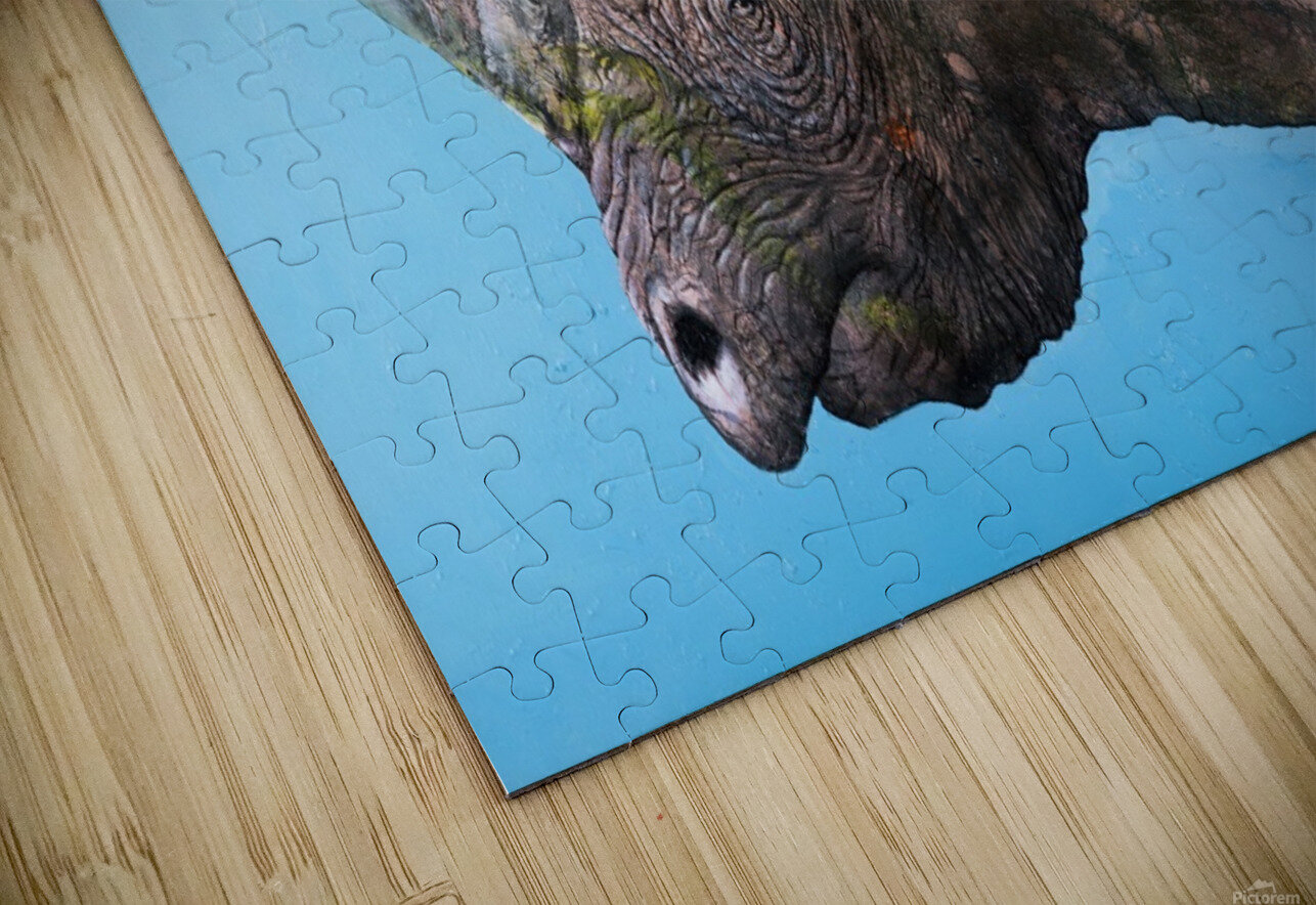 Illustration of a white rhinoceros against a blue background HD Sublimation Metal print