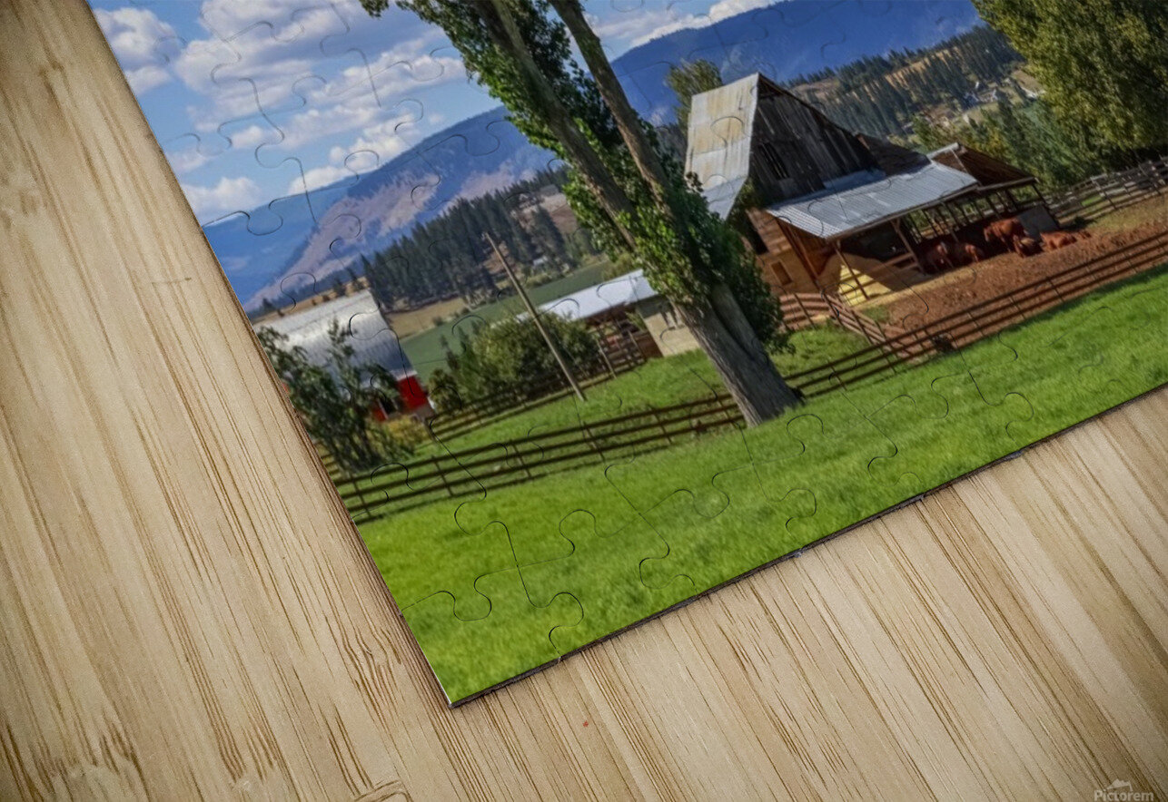 Beef cows rest in the shade of the barn roof under a blue sky with fluffy white clouds in the summer in the North Okanogan; British Columbia, Canada HD Sublimation Metal print