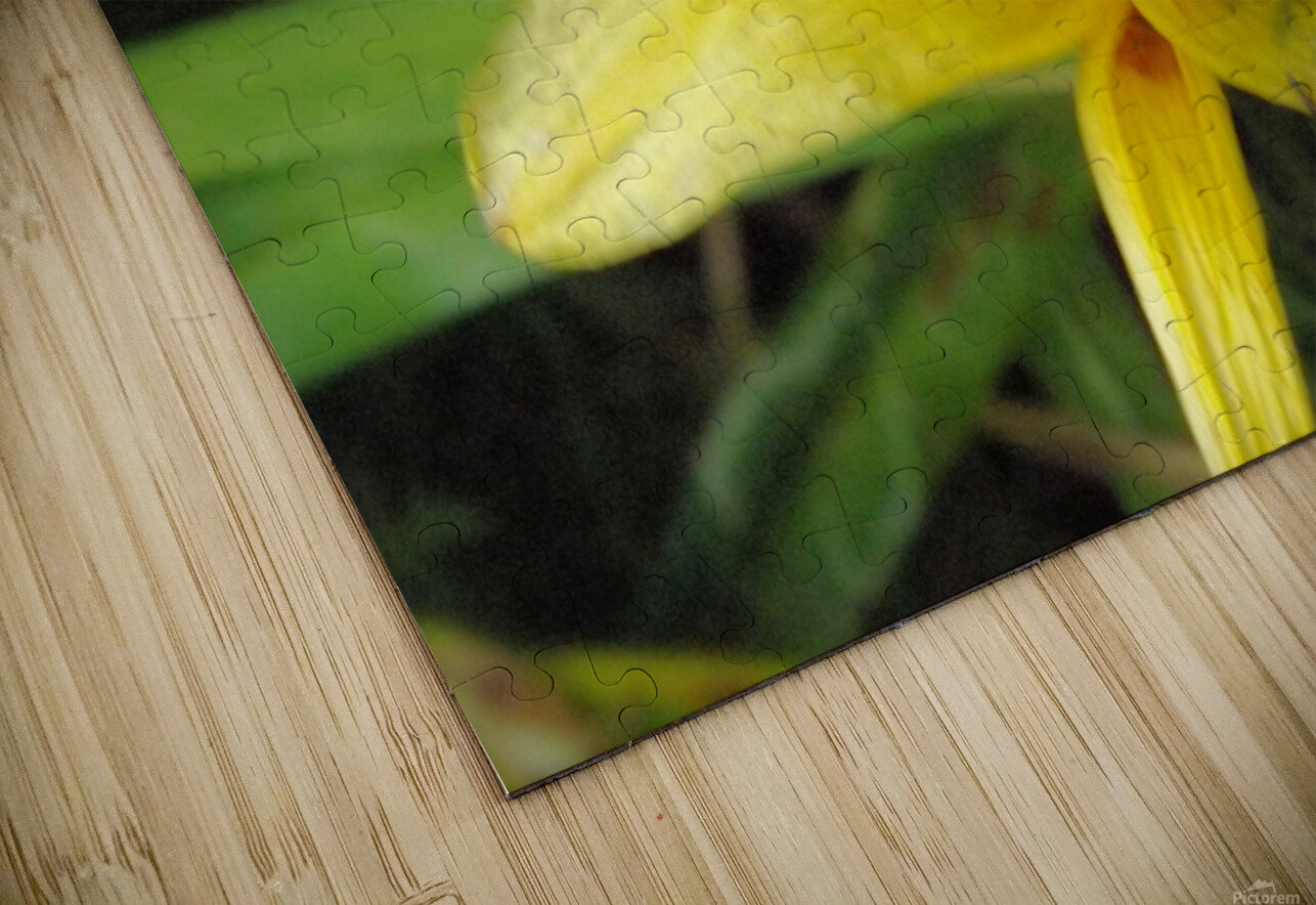 Yellow Flower-2 HD Sublimation Metal print