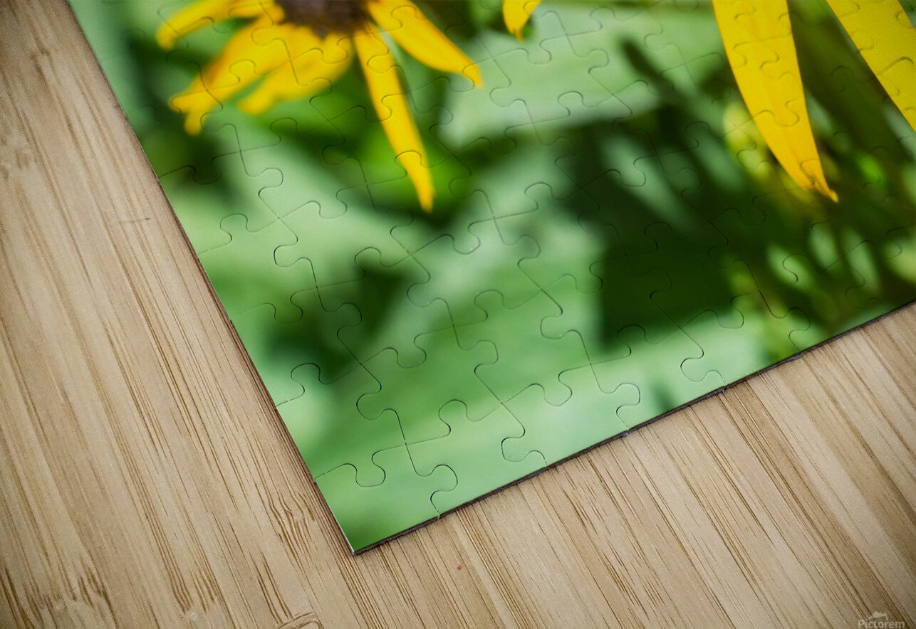 Yellow Cone Flowers  HD Sublimation Metal print