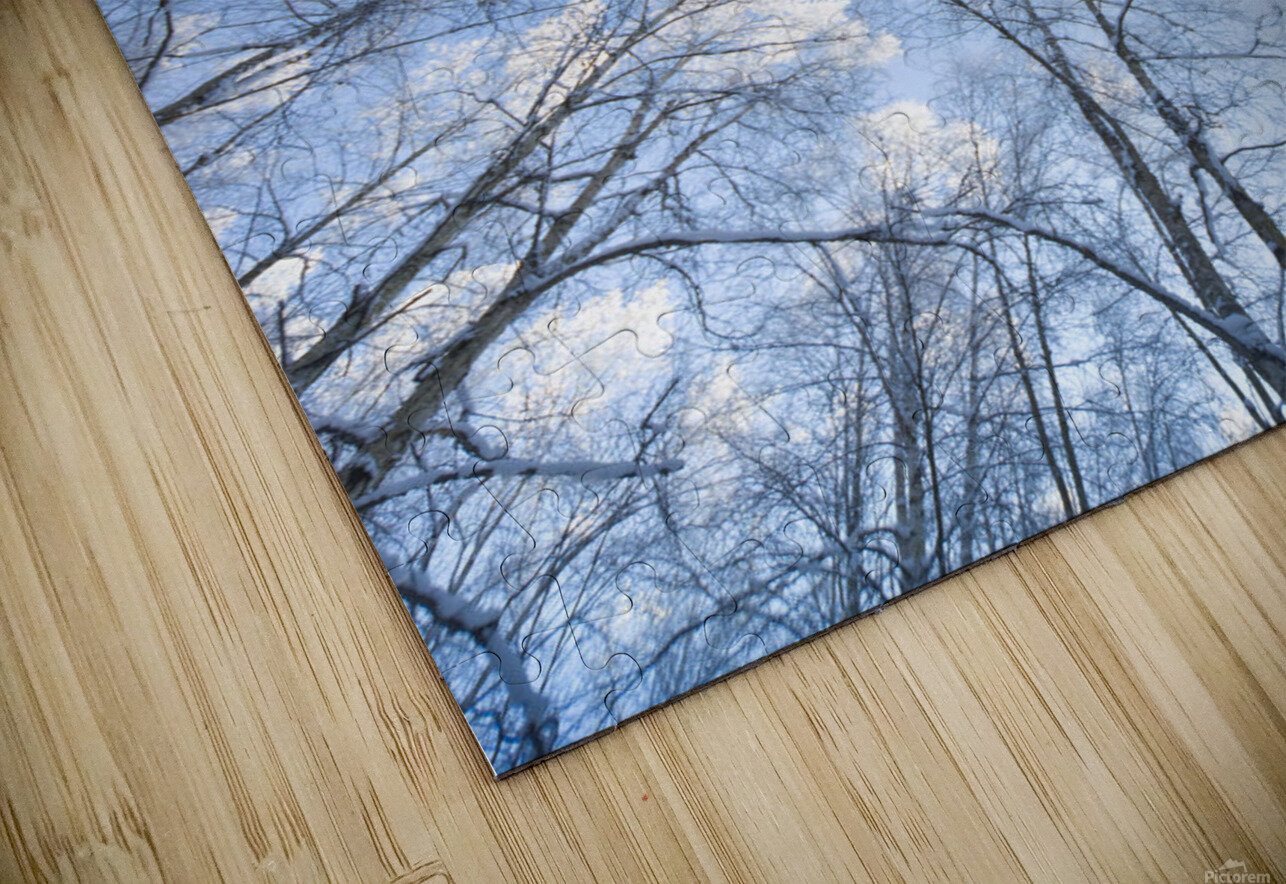 Looking Up Through Hoarfrost Covered Birch Trees In Russian Jack Park, Anchorage, Alaska HD Sublimation Metal print