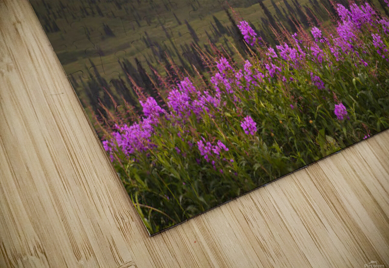 View Of The Chugach Mountains With Fireweed In The Foreground Along The Glenn Highway, Southcentral Alaska, Summer, Hdr HD Sublimation Metal print