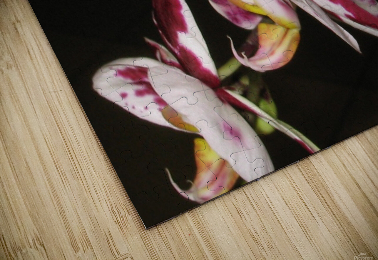 Sexy Orchid HD Sublimation Metal print