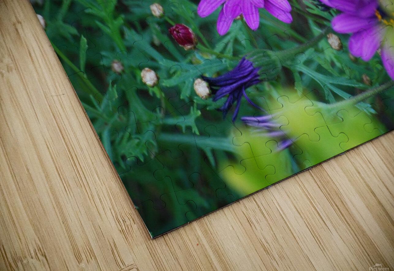 Purple Flowers in Dana Point CA HD Sublimation Metal print
