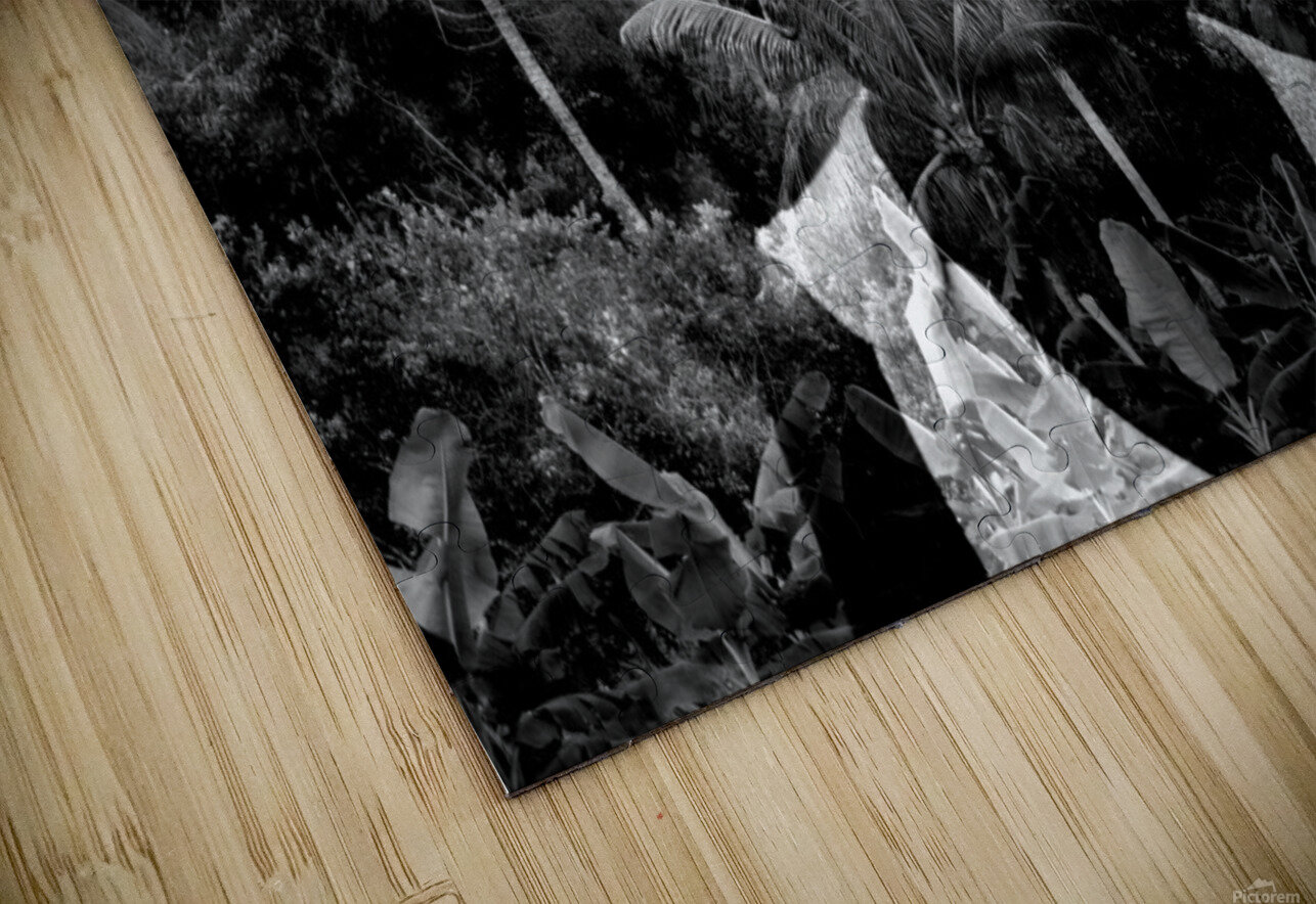 Guyana Child of the jungle  HD Sublimation Metal print