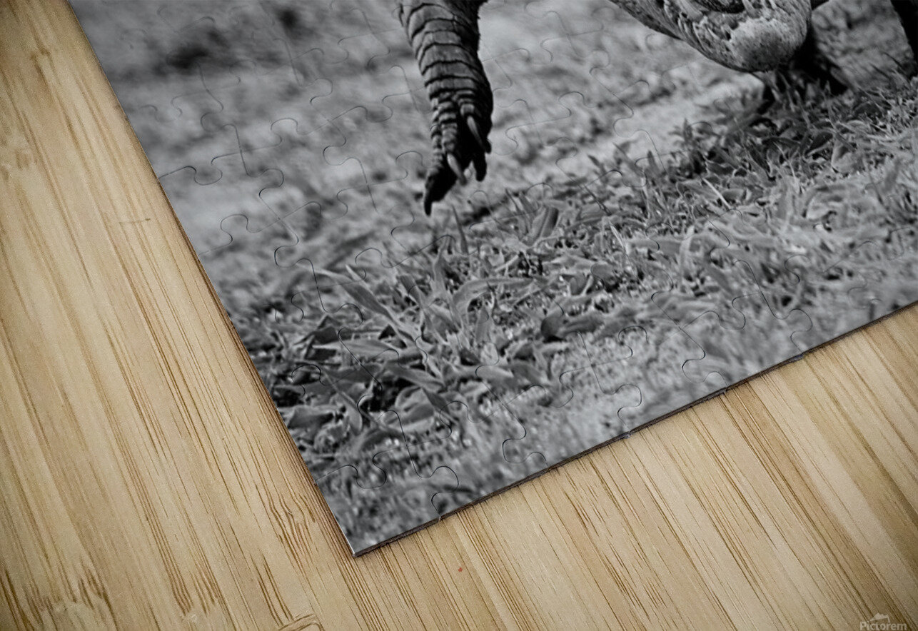 Crocodile Ghana HD Sublimation Metal print