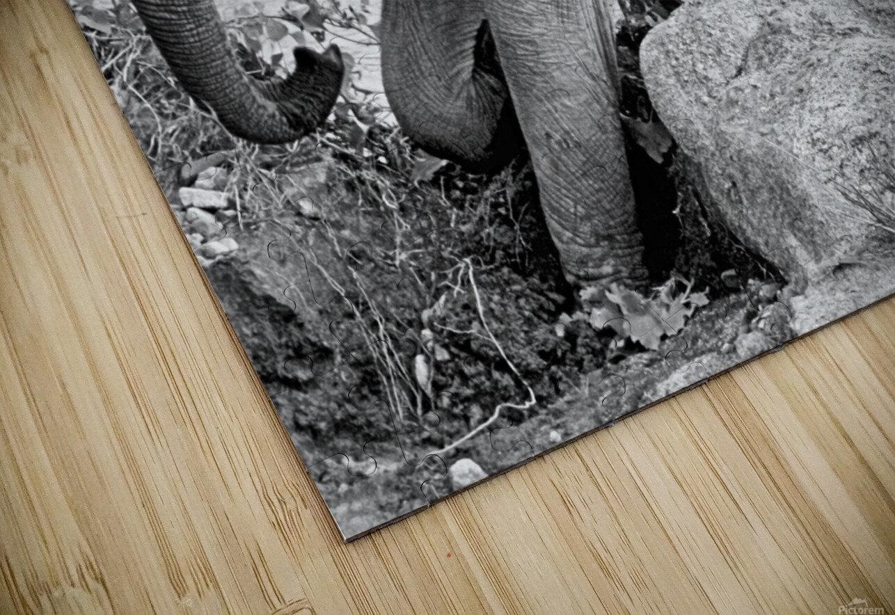 Elephant Baby HD Sublimation Metal print