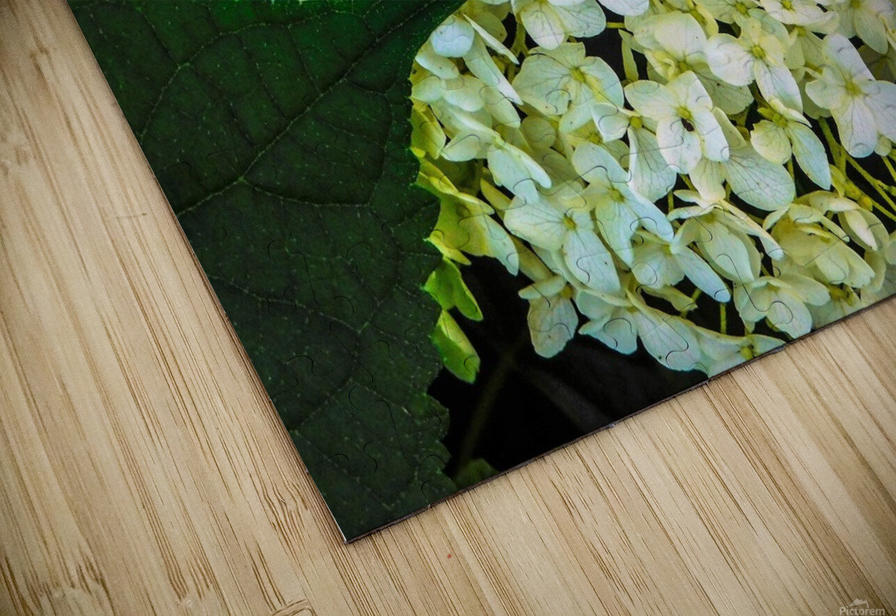 White Perfection HD Sublimation Metal print