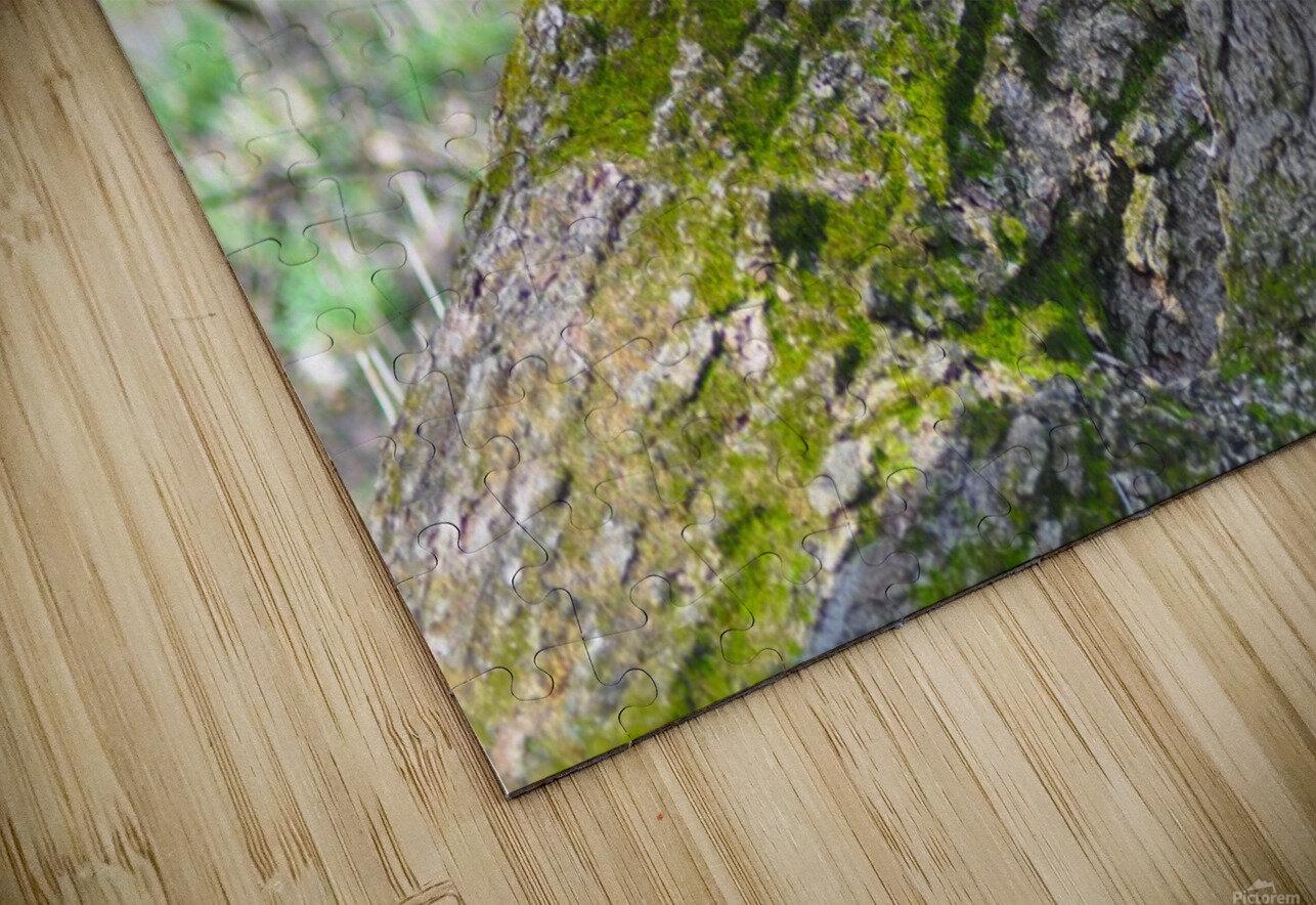 DSC_0223 HD Sublimation Metal print