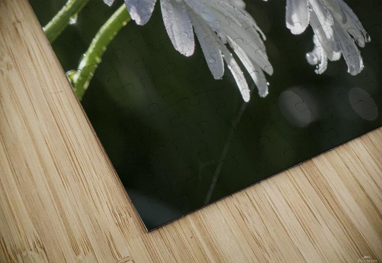 Soeurs jumelles HD Sublimation Metal print