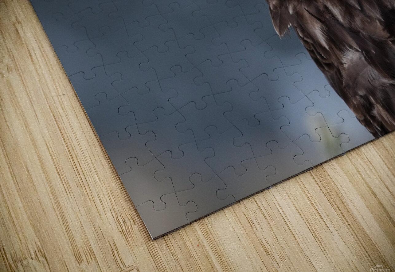 Portrait of an Eagle HD Sublimation Metal print