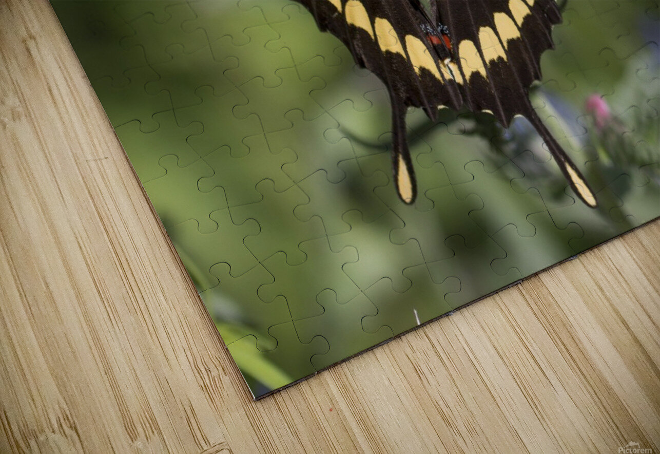 King swallowtail butterfly HD Sublimation Metal print