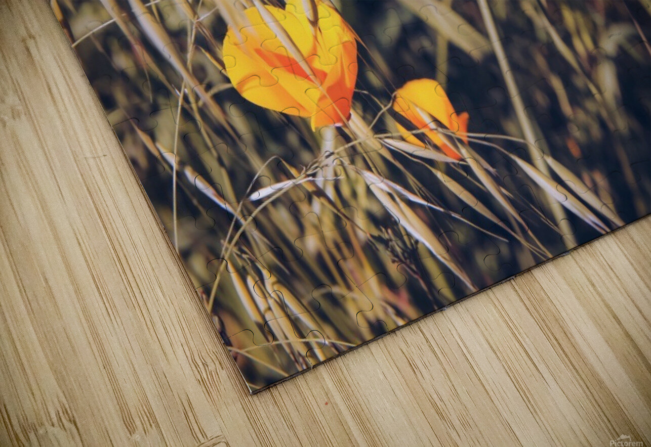 yellow poppy flowers with green leaves texture background HD Sublimation Metal print
