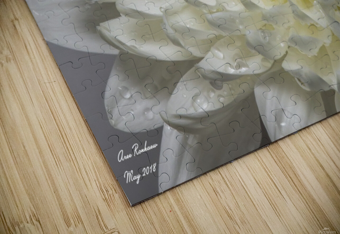 White mum flower with water droplets HD Sublimation Metal print