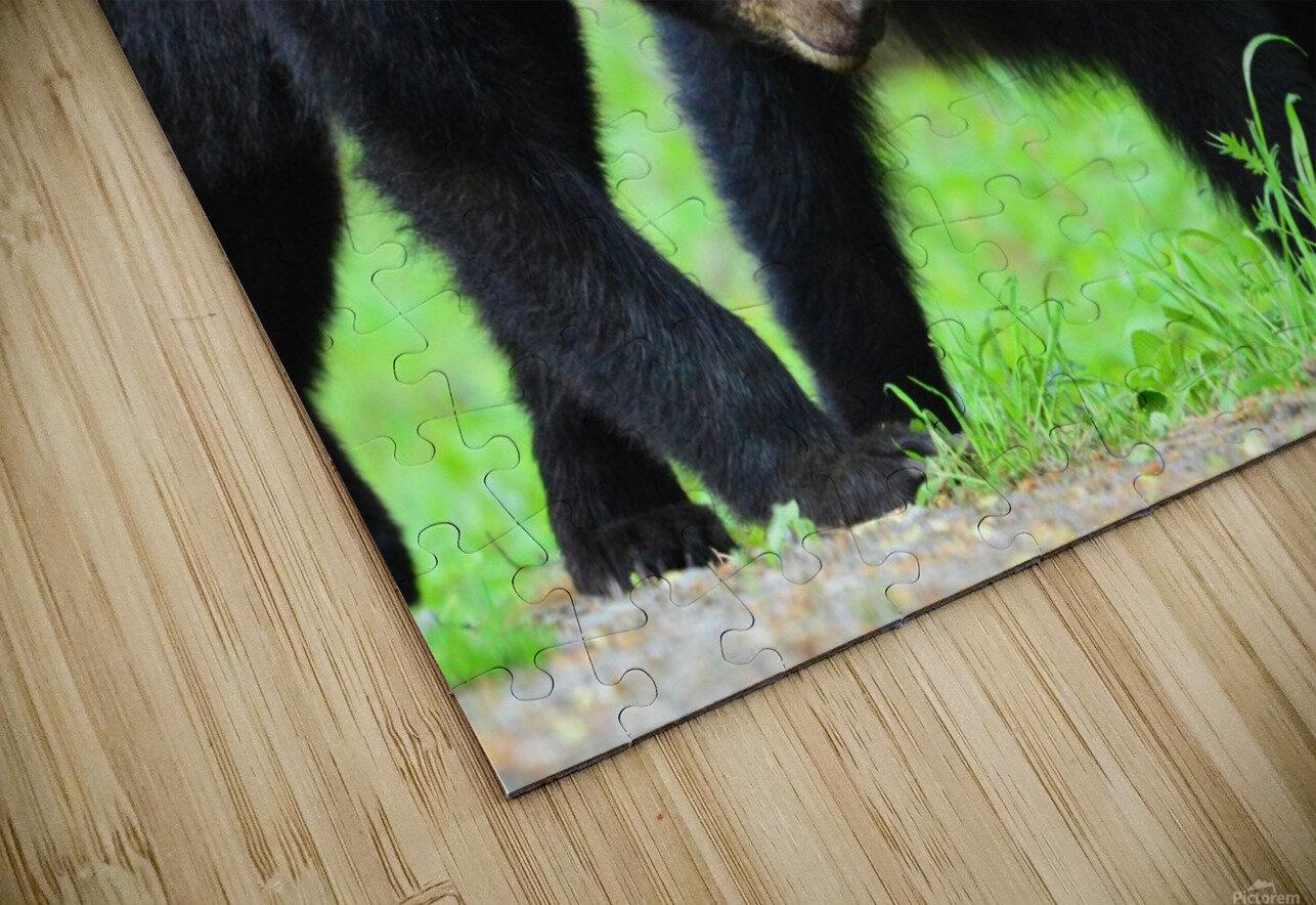3541- Black bear HD Sublimation Metal print