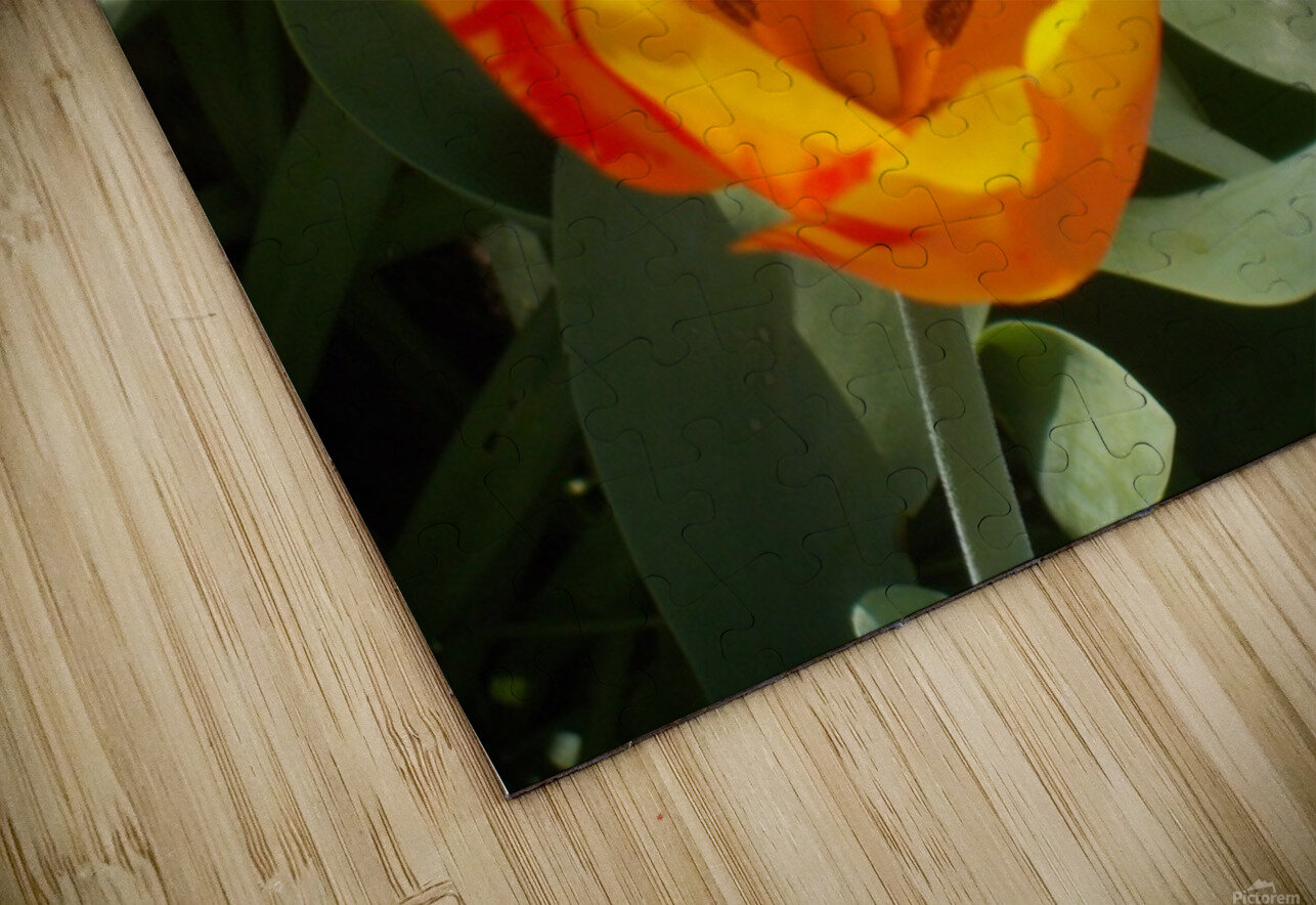 DSCN0767 HD Sublimation Metal print