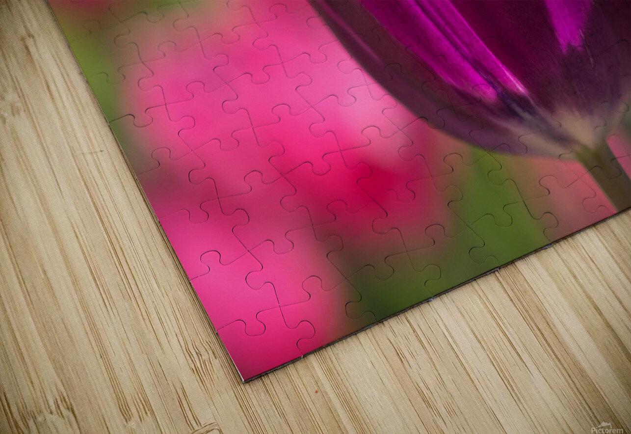 Violet - Violette HD Sublimation Metal print