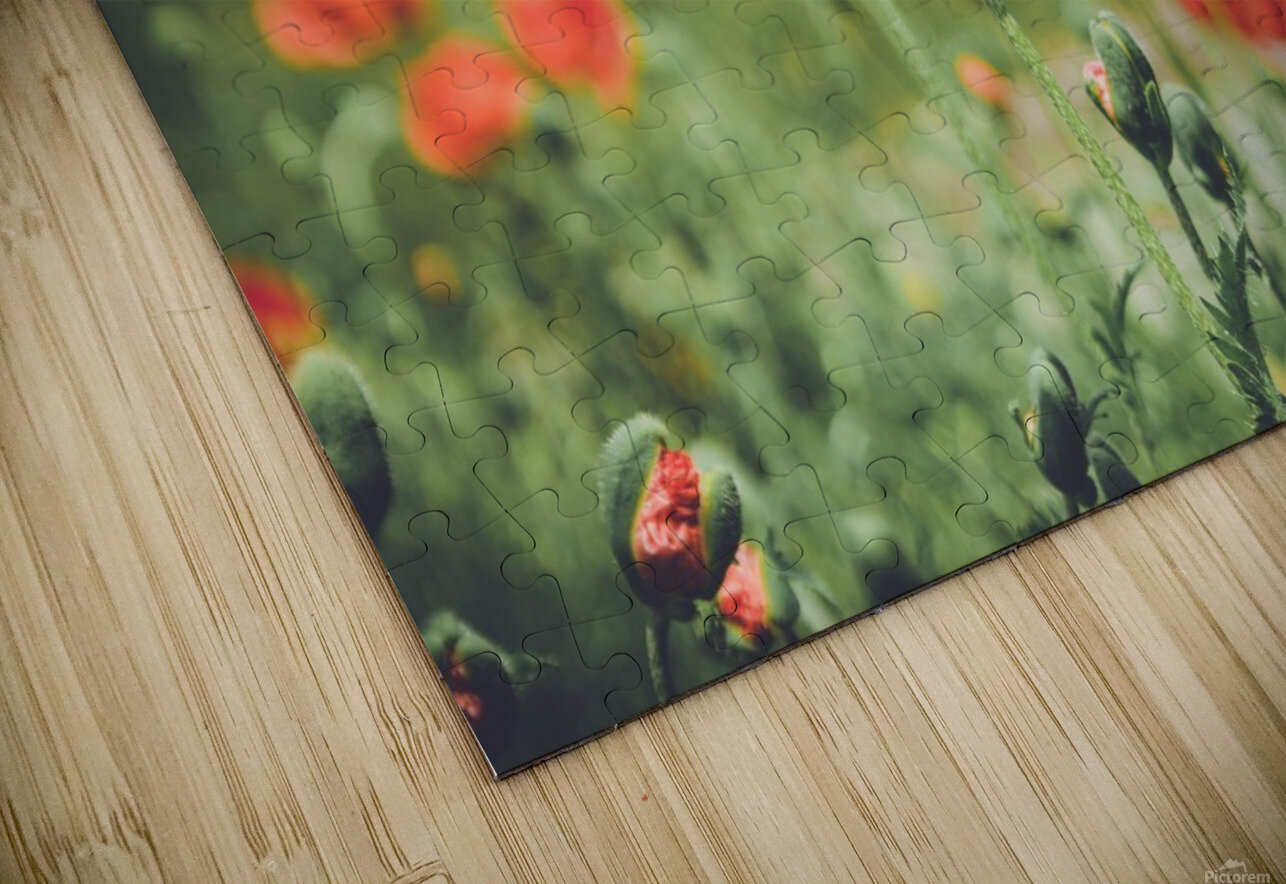 Field of Poppies HD Sublimation Metal print