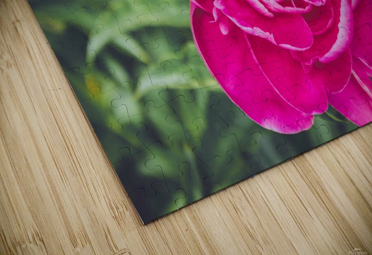 Deadly Beautiful Peonies HD Sublimation Metal print