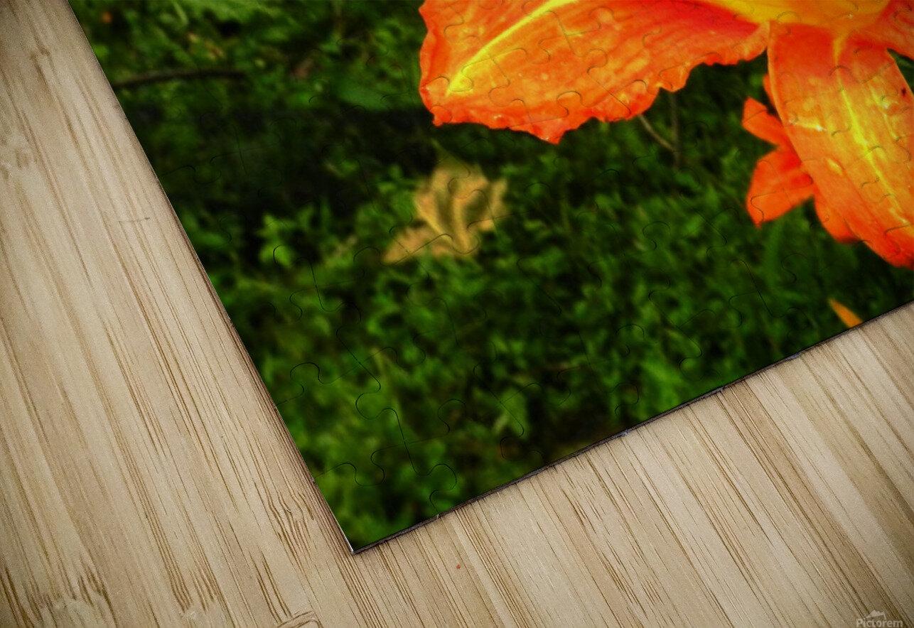 C (7) HD Sublimation Metal print