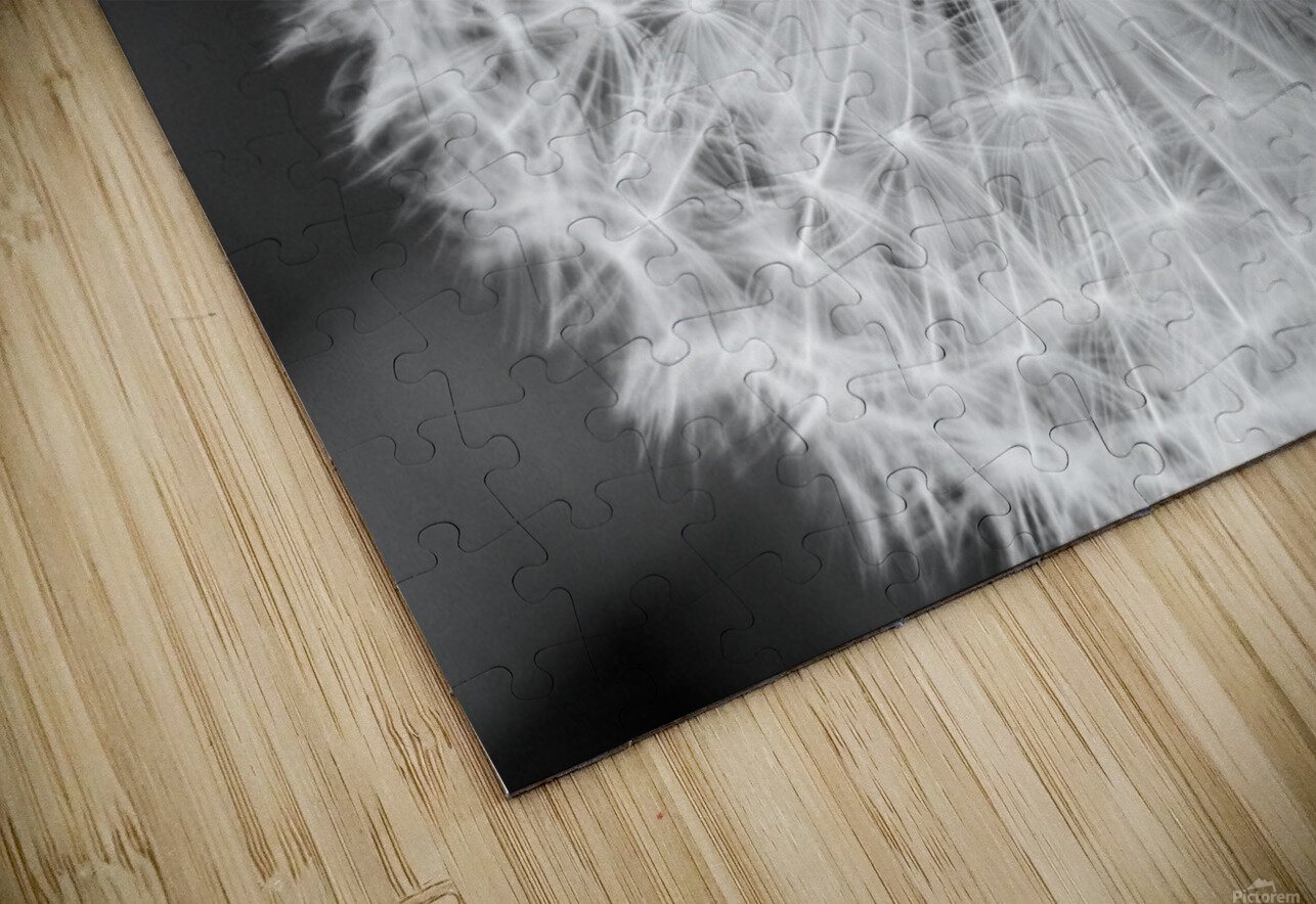 Dandylion black and White HD Sublimation Metal print