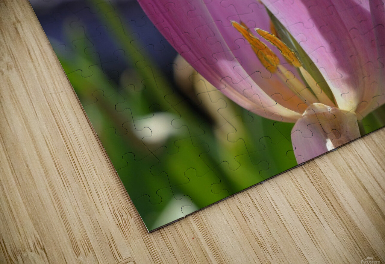 Purple Tulip Photograph HD Sublimation Metal print