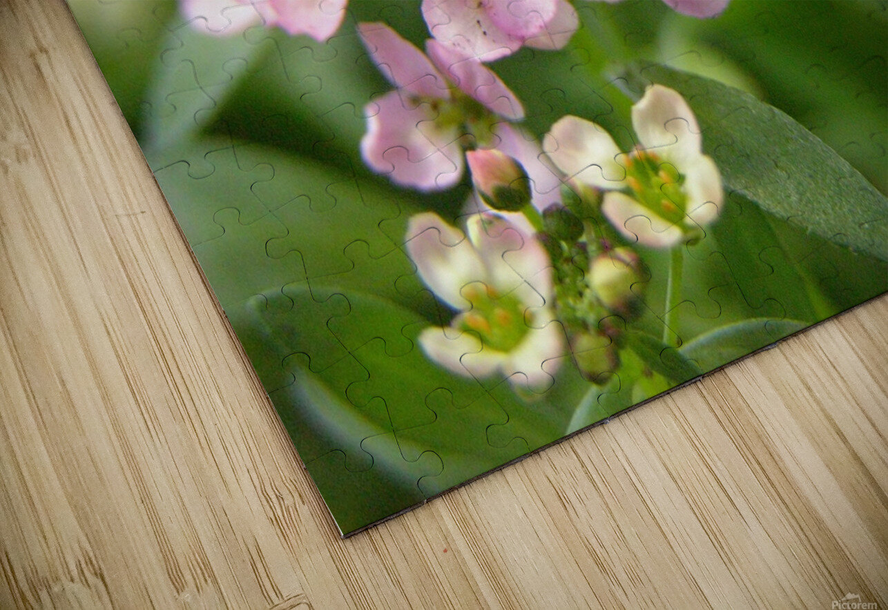 Small Pink Flowers Photography HD Sublimation Metal print